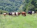 >Grazing Party by Rod Johnson