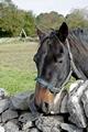>Horse Portrait, Monyash by Rod Johnson