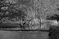 >Riverside Trees, Wolfscote Dale by Rod Johnson