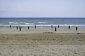 >Beach Cricket, Bridlington by Rod Johnson