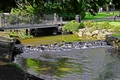 >River Wye Through  Buxton Pavilion Gardens by Rod Johnson