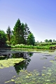 Village Pond, Tissington by Rod Johnson