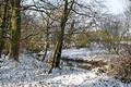 >Snowy Spinney, Brook Hollows, Rolleston by Rod Johnson