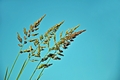 >Pasture Grass Seed Heads by Rod Johnson