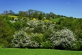>May Blossom near Thorpe in Derbyshire by Rod Johnson