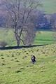 >Hill Walking  by Rod Johnson