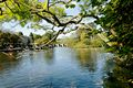 >Bakewell Riverside, Through The Branches by Rod Johnson