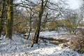 >Snowy Spinney, Brook Hollows, Rolleston by Rod Johnson