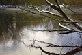 >Melting Snow On Branches Over Rolleston Pond by Rod Johnson