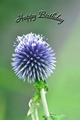 >Card - Globe Thistle by Rod Johnson